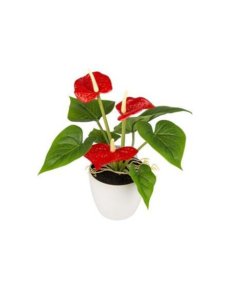 MINI ANTHURIUM REAL TOUCH X3